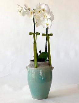 Seramik Vazoda Çift Dal Beyaz Orkide  çiçek gönder