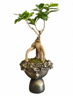 Özel Tasarım Saksıda Bonsai  çiçek gönder