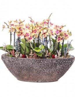 Segreto Serisi Sarı Orkide Mix Tasarım  çiçek gönder