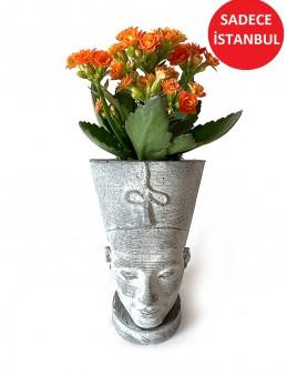 Nefertiti Seramikte  Kalanchoe Bitkisi  çiçek gönder