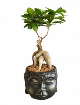 Buddha Saksıda Bonsai  çiçek gönder