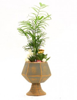 Özel Tasarım Vazoda Chamadore ve Sukulentler  çiçek gönder