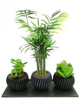 Üçlü Özel Sukulent Tasarım  çiçek gönder