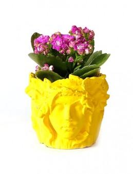 Özel Tasarım Beton Saksıda Kalanchoe  çiçek gönder