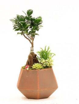 Seramik Vazoda Bonsai  çiçek gönder