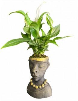 Black Woman Spatifilium Saksı Çiçekleri çiçek gönder
