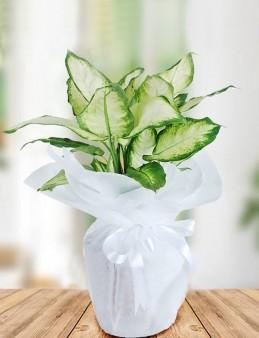 Tropik  çiçek gönder