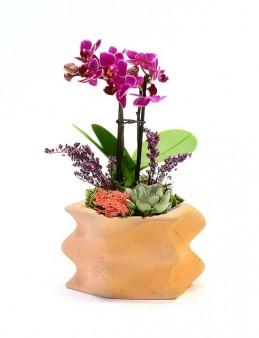 Wave Saksıda Mini Orkide ve Sukulent  çiçek gönder