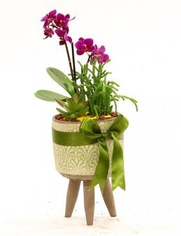 Ayaklı Saksıda Mini Orkide ve Sukulentler  çiçek gönder