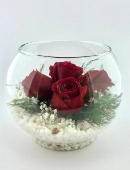 Akvaryum Camda 5 Kırmızı Gül  çiçek gönder