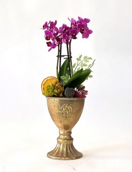 Metal Vazoda Mini Orkide Orkideler çiçek gönder