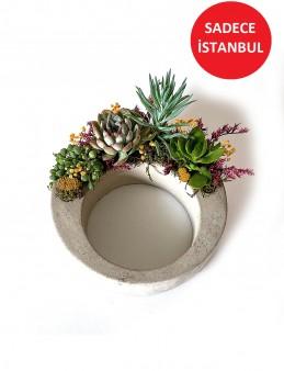 Aşk Cemberi Teraryum Terarium çiçek gönder