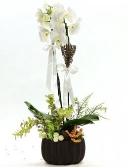 Dekoratif Saksıda Çift Dallı Beyaz Orkide Orkideler çiçek gönder