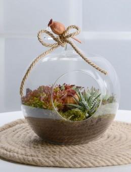 Orta Boy Elma Terrarium  çiçek gönder