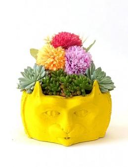 Kedili Saksıda Sukulent   çiçek gönder