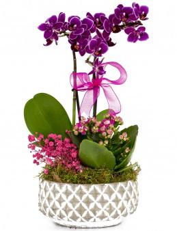 Desenli Saksıda  Mini Orkide ve Kalanchoe  çiçek gönder