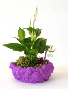 Özel Tasarım Beton Saksıda Spatifilyum  çiçek gönder