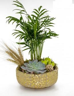 Dağ Palmiyesi ve Ekeberya Bitki Aranjmanı.  çiçek gönder