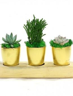 Üçlü Sukulent Seti  çiçek gönder