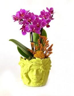 Özel Tasarım Beton Saksıda Mini Orkide Orkideler çiçek gönder