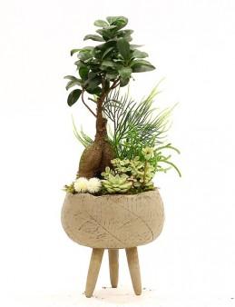 Özel Tasarım Bonsai ve Sukulent Aranjmanı  çiçek gönder