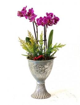 Özel Tasarım Metal Vazoda Mini Orkide Orkideler çiçek gönder