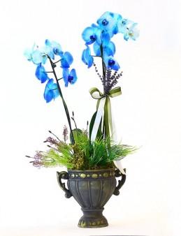 Siyah Taş Saksıda Mavi Orkide Orkideler çiçek gönder