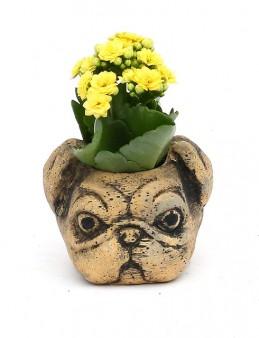 Pug Kalanchoe   çiçek gönder