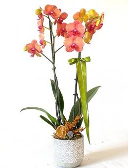 Çift Dallı Ateş Orkide Orkideler çiçek gönder
