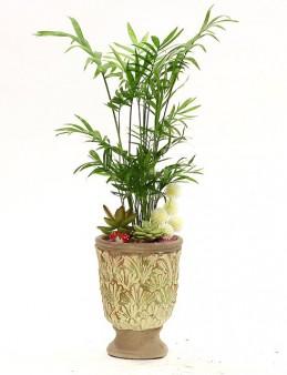 Dekoratif Vazoda Özel Tasarım Bitki ve Sukulentler  çiçek gönder