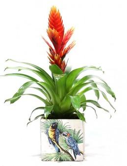 Tropik İklim Desenli Saksıda Vriesea  çiçek gönder