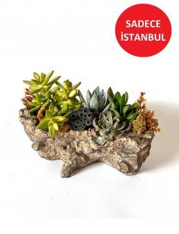 Doğal Seramikte Teraryum  Terarium çiçek gönder