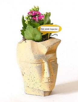 Man Head Kalanchoe Pembe  çiçek gönder