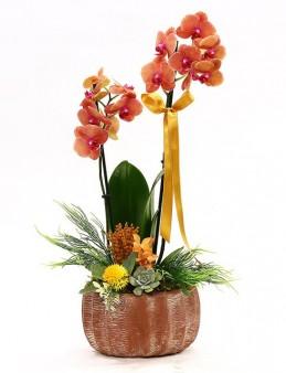 Özel Tasarım Ateş Orkide Orkideler çiçek gönder