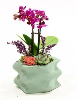 Wave Saksıda Orkide ve Sukulent  çiçek gönder