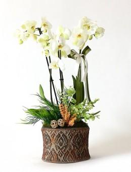 Taş Saksıda Beyaz Orkide Orkideler çiçek gönder