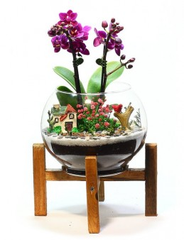 Ahşap Ayaklı Teraryum Mini Orkide Orkideler çiçek gönder