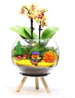 Ayaklı Saksıda Özel Renkli Orkide Orkideler çiçek gönder