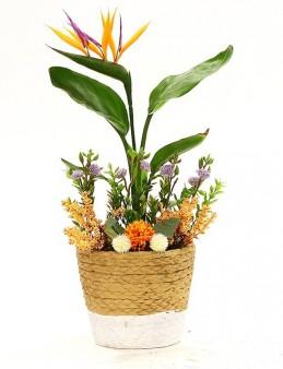 Sepet Beton Saksıda Starliçe  çiçek gönder