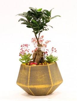 Özel Tasarım Seramik Vazoda Bonsai ve Sukulentler  çiçek gönder