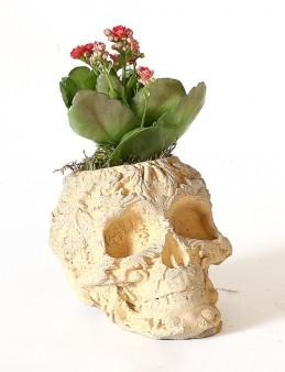 Kuru Kafa Desenli Vazoda Kalanchoe Bitkisi  çiçek gönder