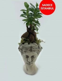 Helen Saksı da Bonsai Bitkisi  çiçek gönder
