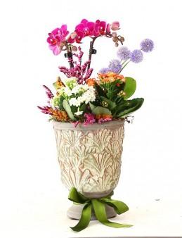 Özel Tasarım Vazoda Orkide Bahçesi Orkideler çiçek gönder
