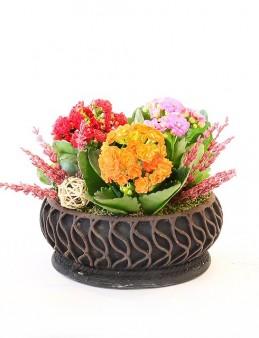 Özel Tasarım Saksıda 3'lü Kalanchoe  çiçek gönder
