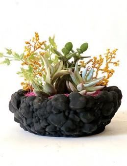 Beton Saksıda Sukulent Bahçesi  çiçek gönder