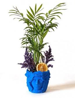 Özel Tasarım Chamadore Bitkisi  çiçek gönder