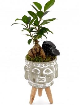 3 Ayaklı Budda Seramikte Bonsai  çiçek gönder