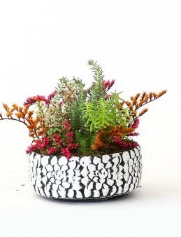 Özel Tasarım Sedum Bahçesi  çiçek gönder