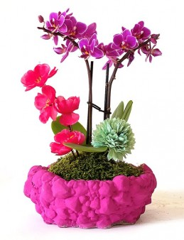 Prenses Mini Orkide  Orkideler çiçek gönder