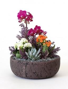 Eskitme Saksıda Minyatür Orkide ve Sukulentler  çiçek gönder